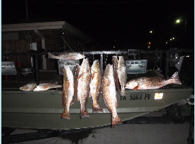 redfish andd drum hanging off a stringer on the side of a bowfishing boat