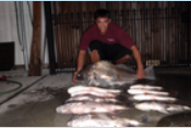 a young man taking a picture with a very large drum fish with other large redfish laying on the ground