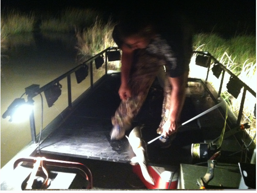 man taking the arrow out of a fish on the deck of a boat at night